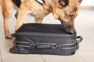Trump's budget would cut bomb-sniffing dogs at airports, train hubs