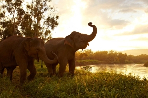 Watch Adorable Rescue Elephants Bathe and Play on This Hotel's Daily Livestream